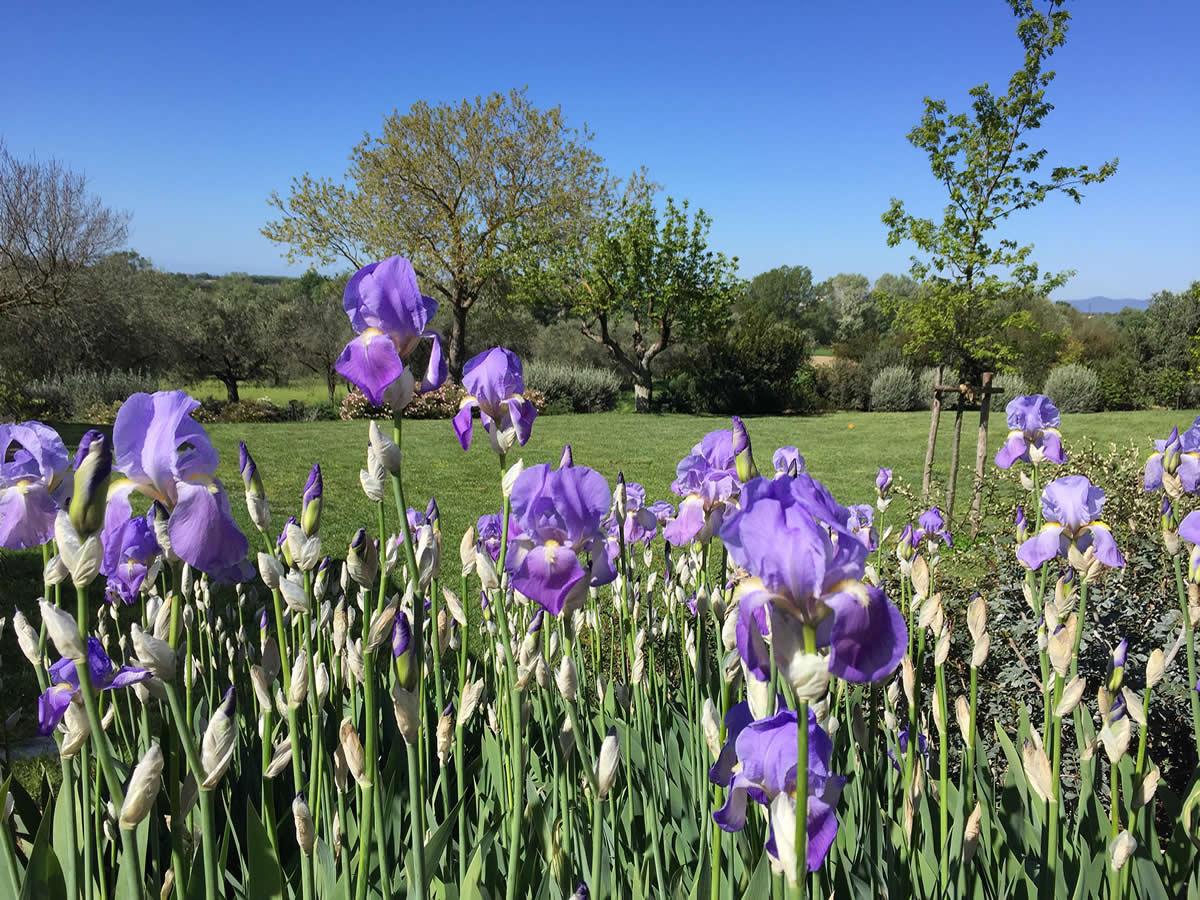 Legge Bonus Verde 2018 bonus verde per giardini, terrazze e balconi - ambiente lab